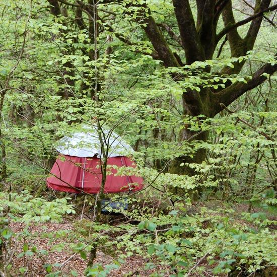 Dormir dans les bois