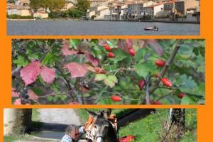 Flânerie de Castelnaudary à Carcassonne