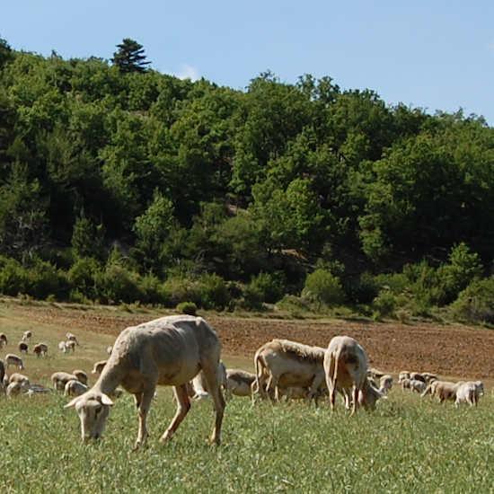 Les hauts plateaux de Provence