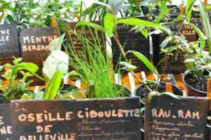 Initiatives jardin tantugou 2