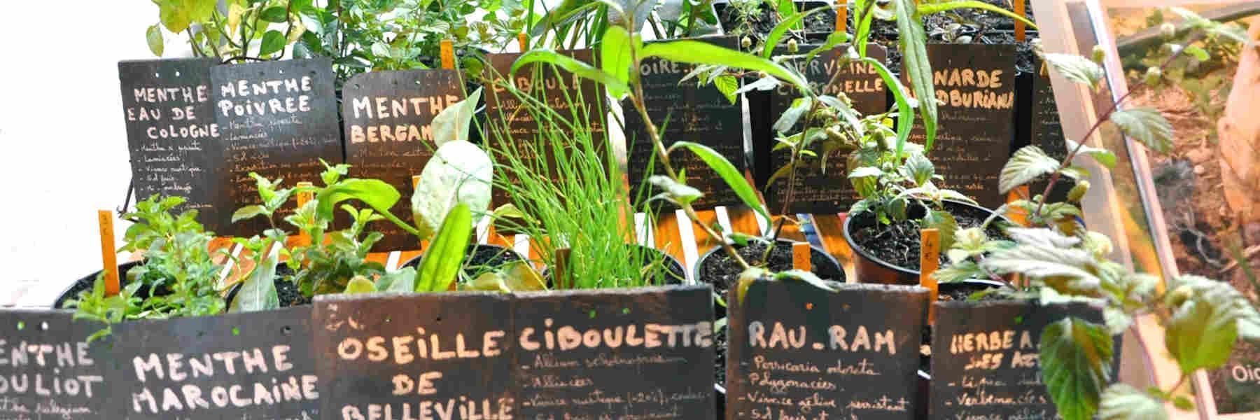 Les initiatives du jardin de Tantugou