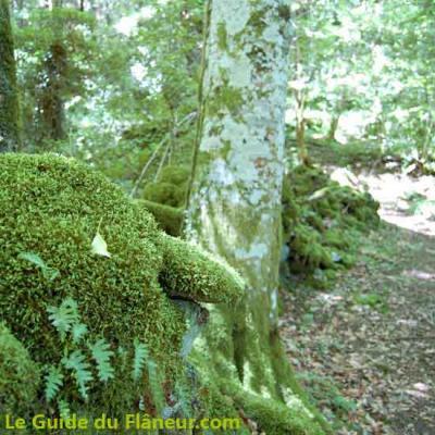 Chemin en forêt à Lamontélarié