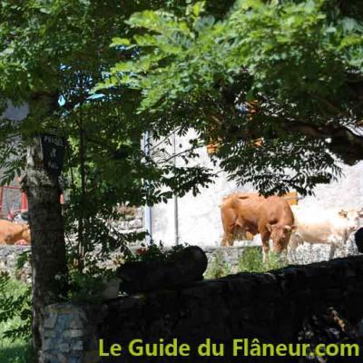 Lamontelarie vaches