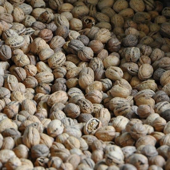 Les noix de Corrèze