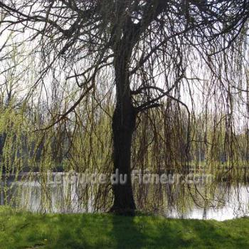 Paisible paysage charente
