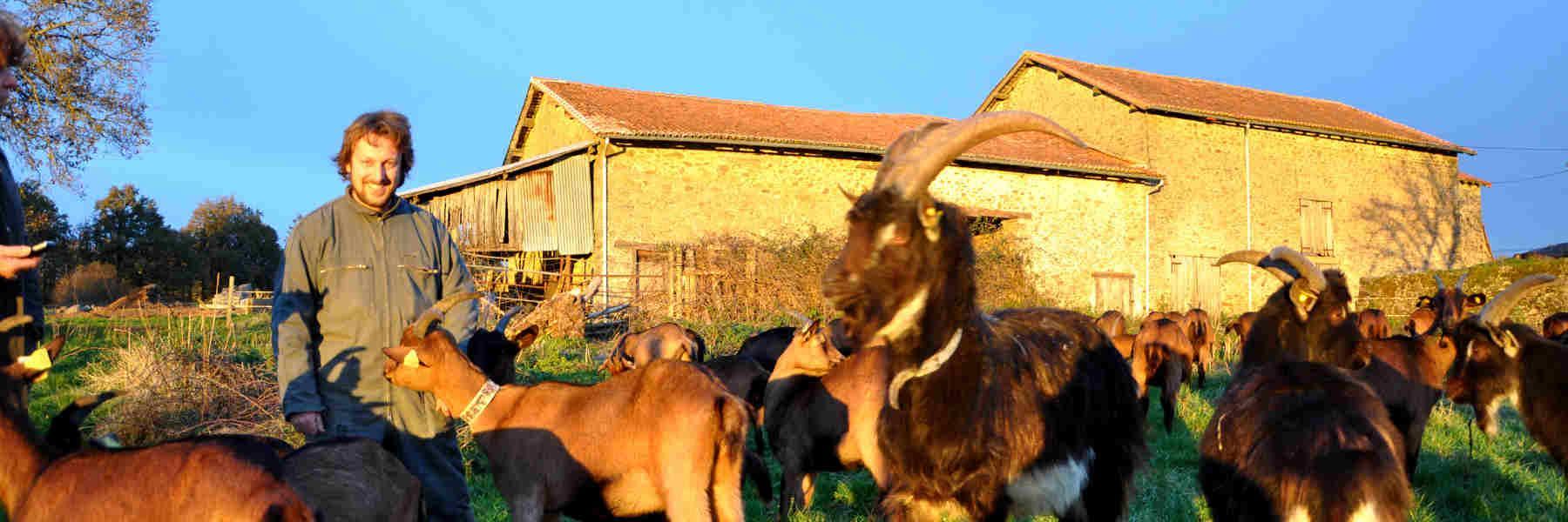 Producteur de chèvres à Gorre
