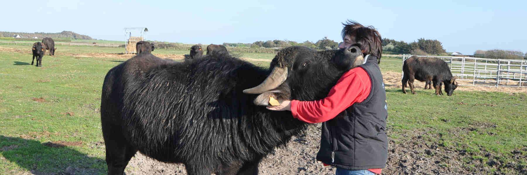 Producteur de la chèvrerie de la baie