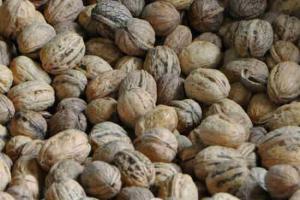 Producteur noix biologiques bilhac 2