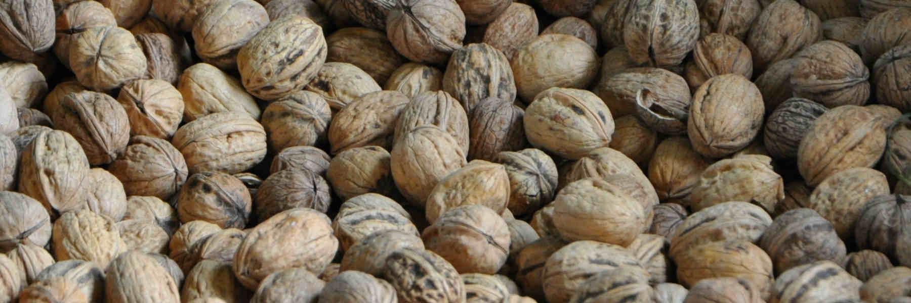 Producteur de noix biologiques à Bilhac