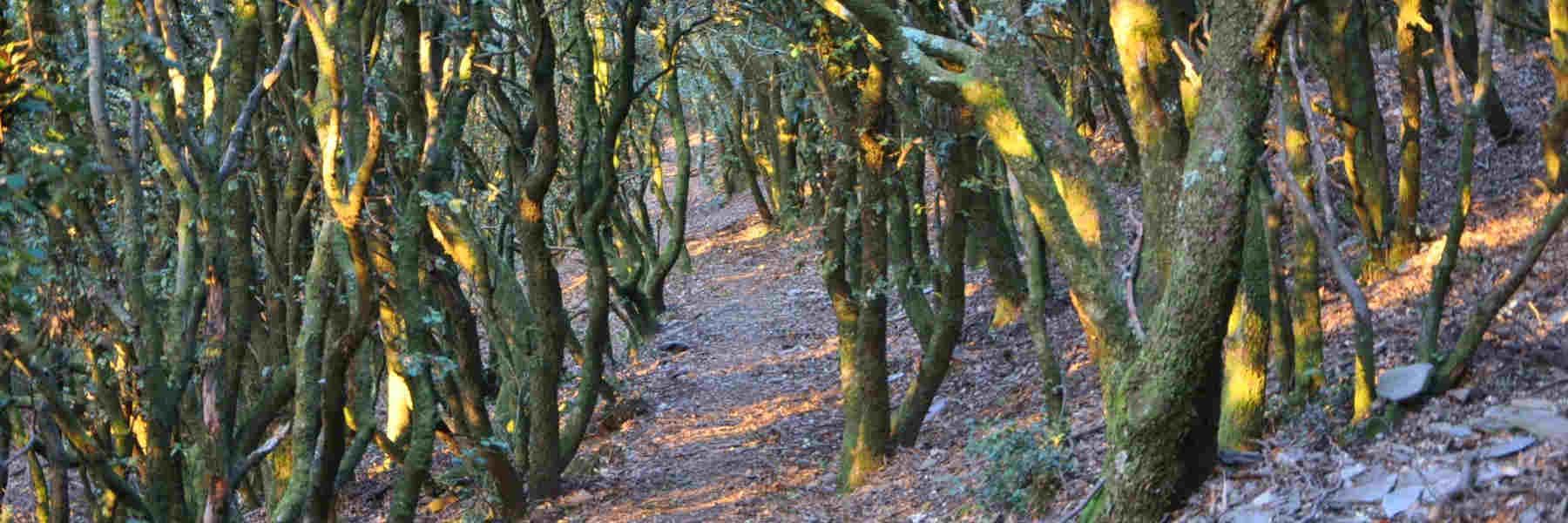 La randonnée pédestre de Roquefère