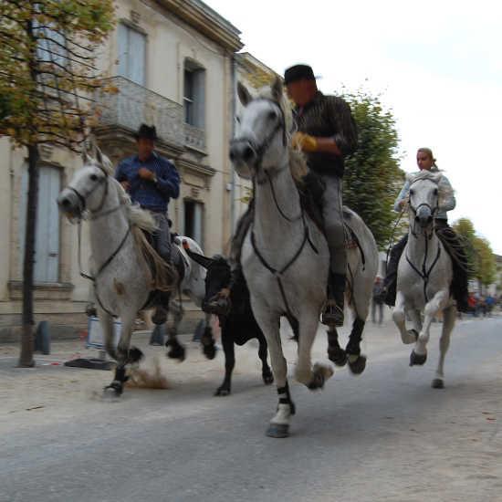 Tradition de Camargue dans le Gard