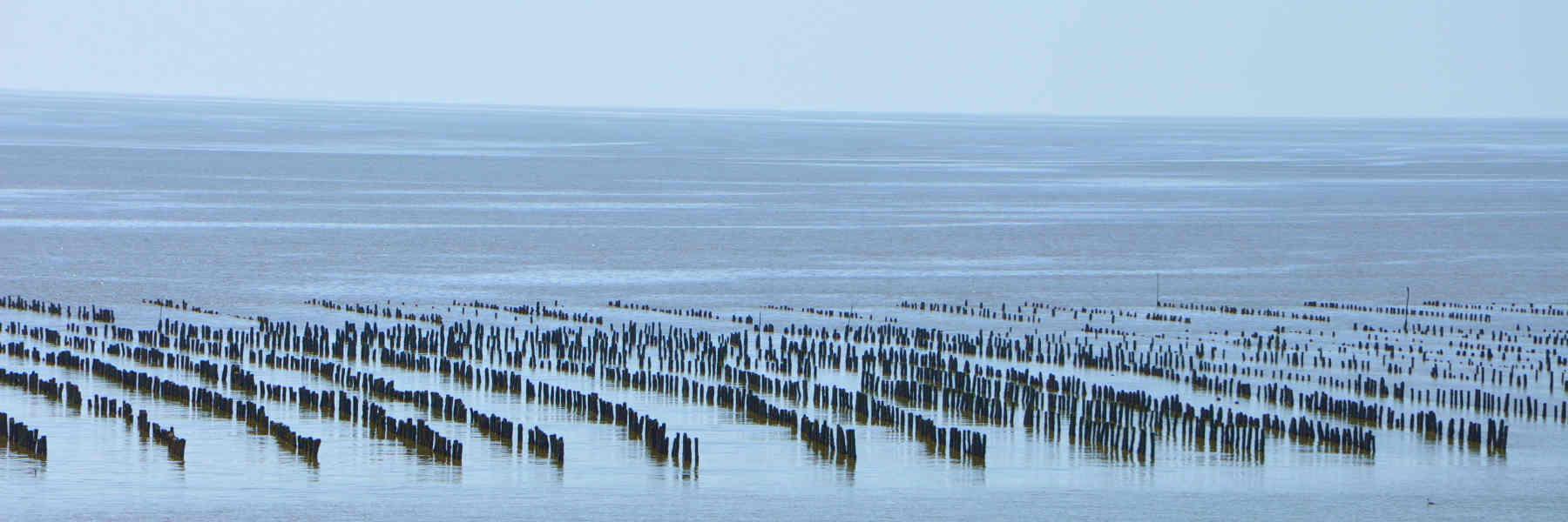 Visite de l'estuaire de la Vilaine