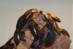 Visite insectarium lizio 2