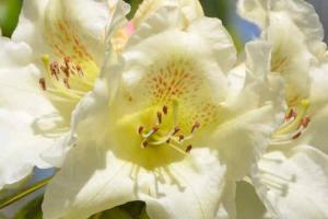 Visite parc floral combrit 2