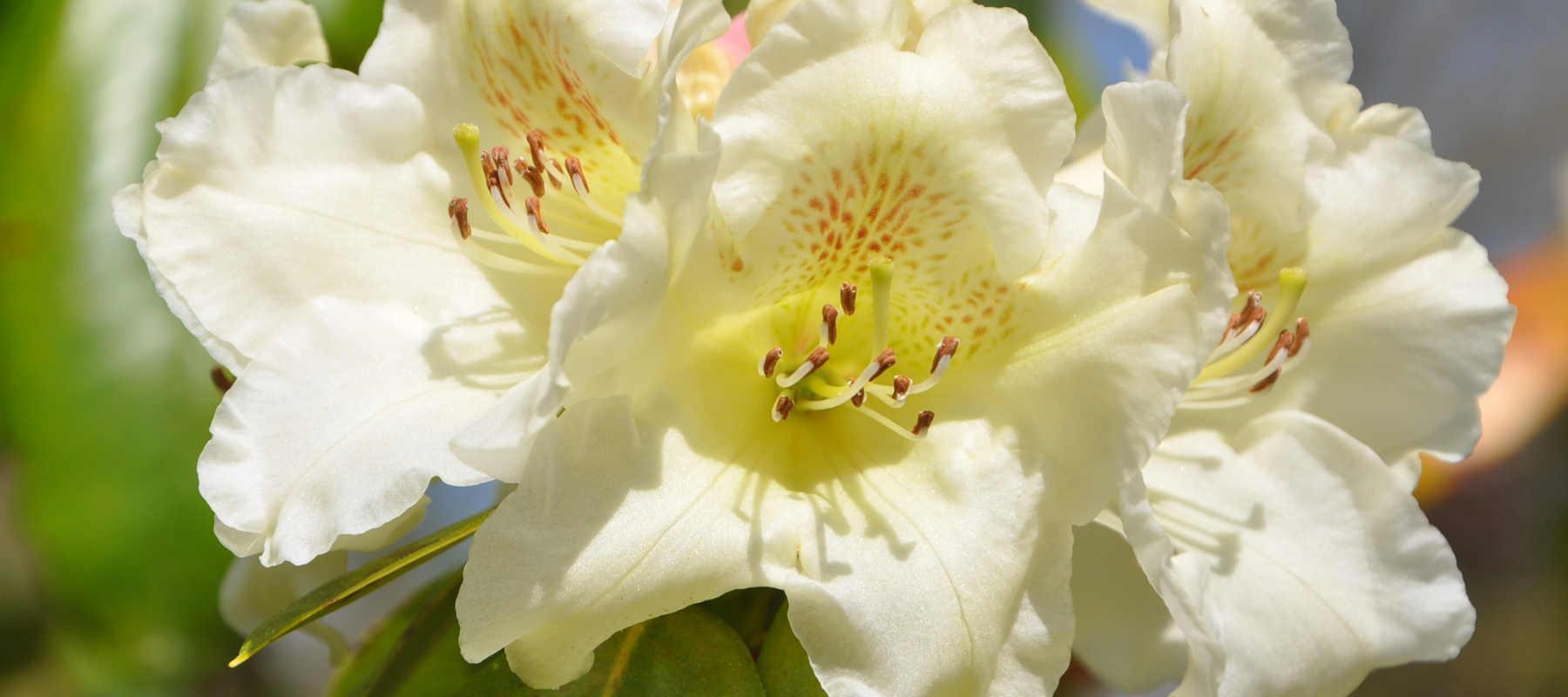 Visite du parc floral de Combrit