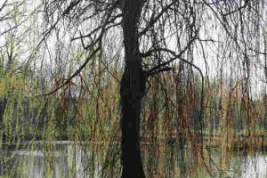 Visite village blanzaguet saint cybard 2