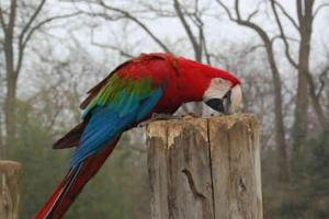 Visite zoo doue fontaine 2