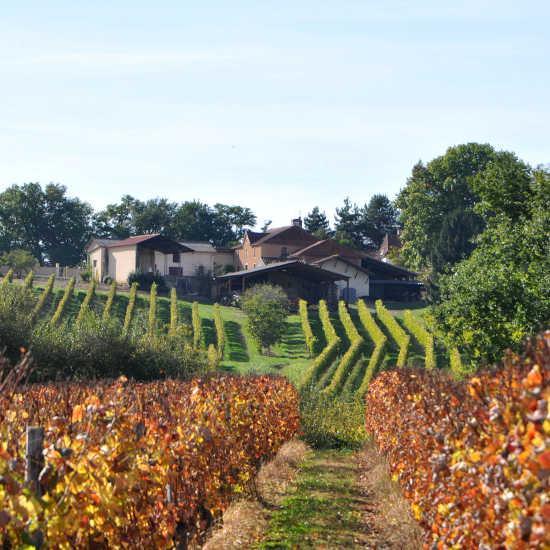 Viticulture dans le Gers
