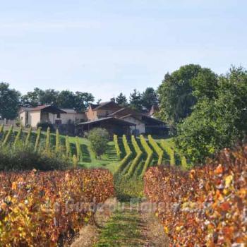 La viticulture dans le Gers