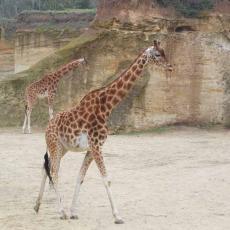 Le zoo de Doué la Fontaine